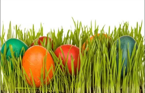 Боядисване на великденски яйца с естествени бои